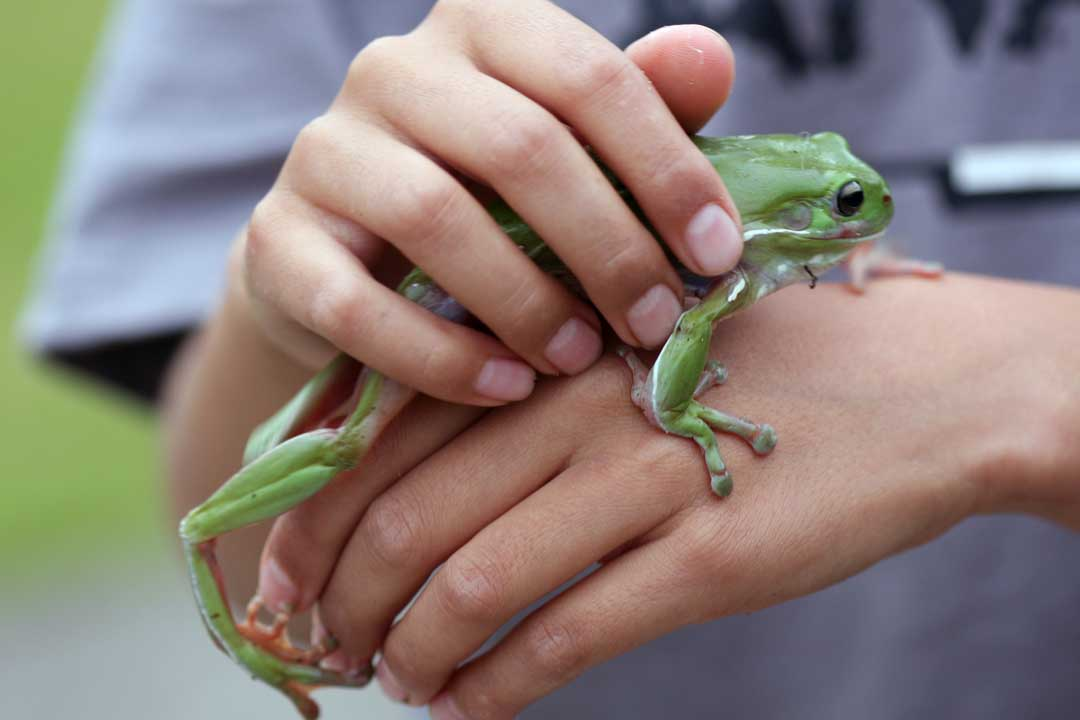 A green tree frog held by a young boy