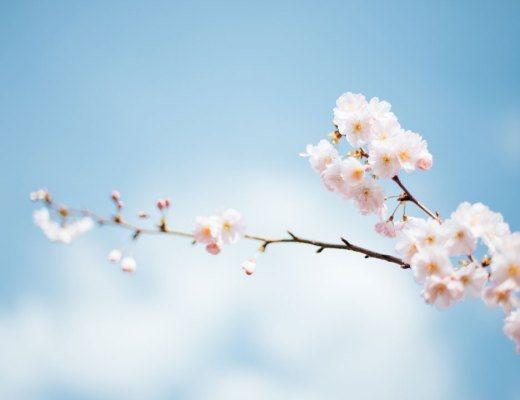Spring flower blossoms on branch photo by Anthony DELANOIX (@anthonydelanoix) on Unsplash
