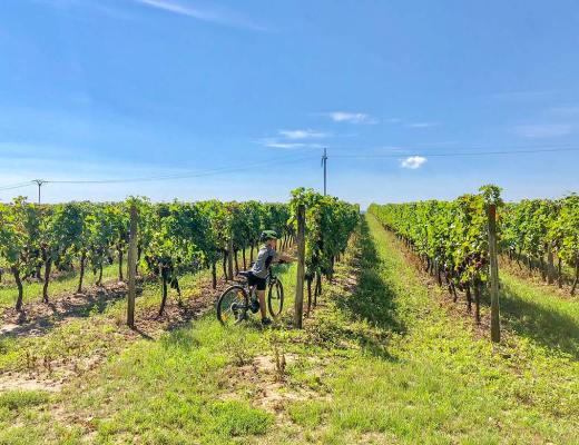 Moravian Wine Country