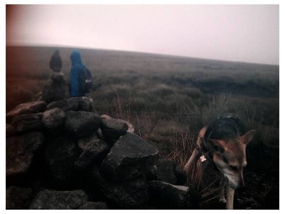 my Dog near the Pennine Way and Oldham Way cairn