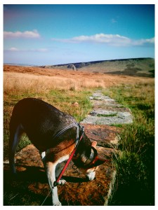 Photo of my Brodie Dog near the Roman Road in Marsden