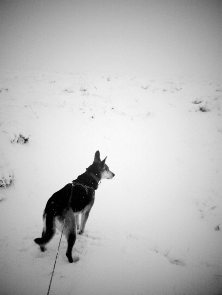 my dog Brodie in the snow