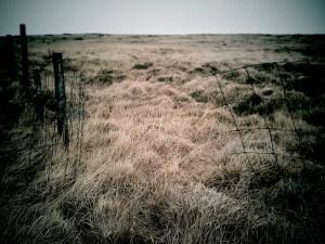 cut fence on Marsden rifle range