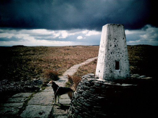 Black Hill trig point with dog