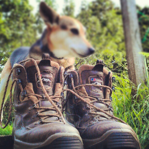 Brodie Dog and Walking Boots