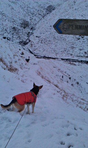 Brodie Dog on Pennine Way