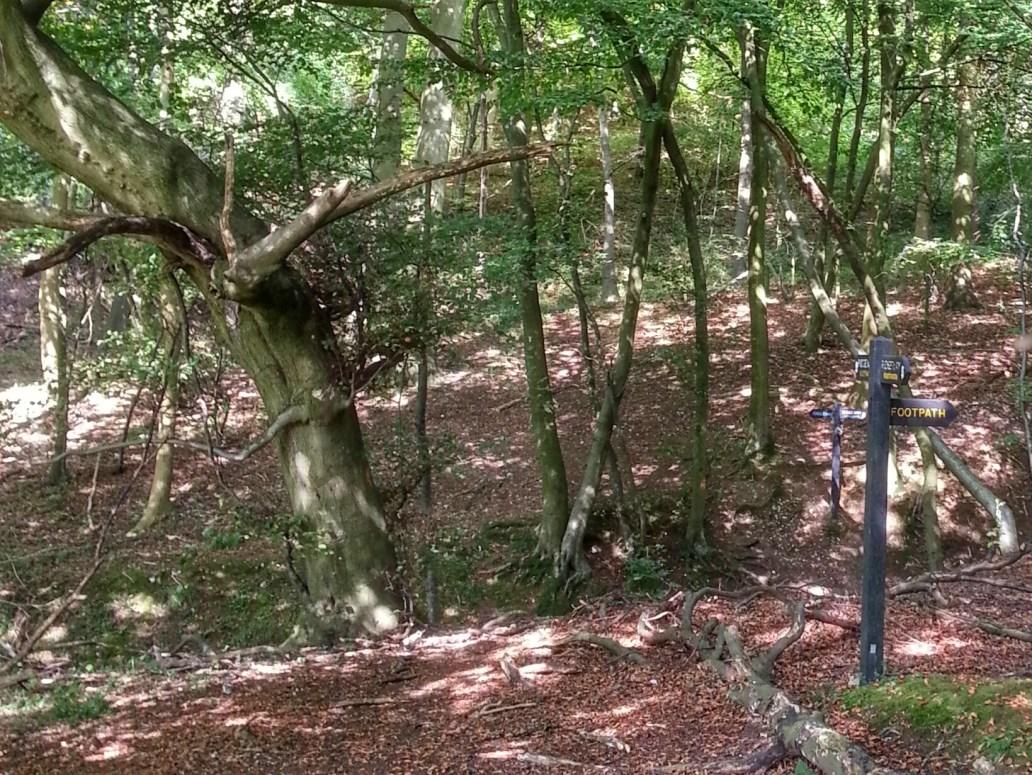 Woods along the Ridgeway trail