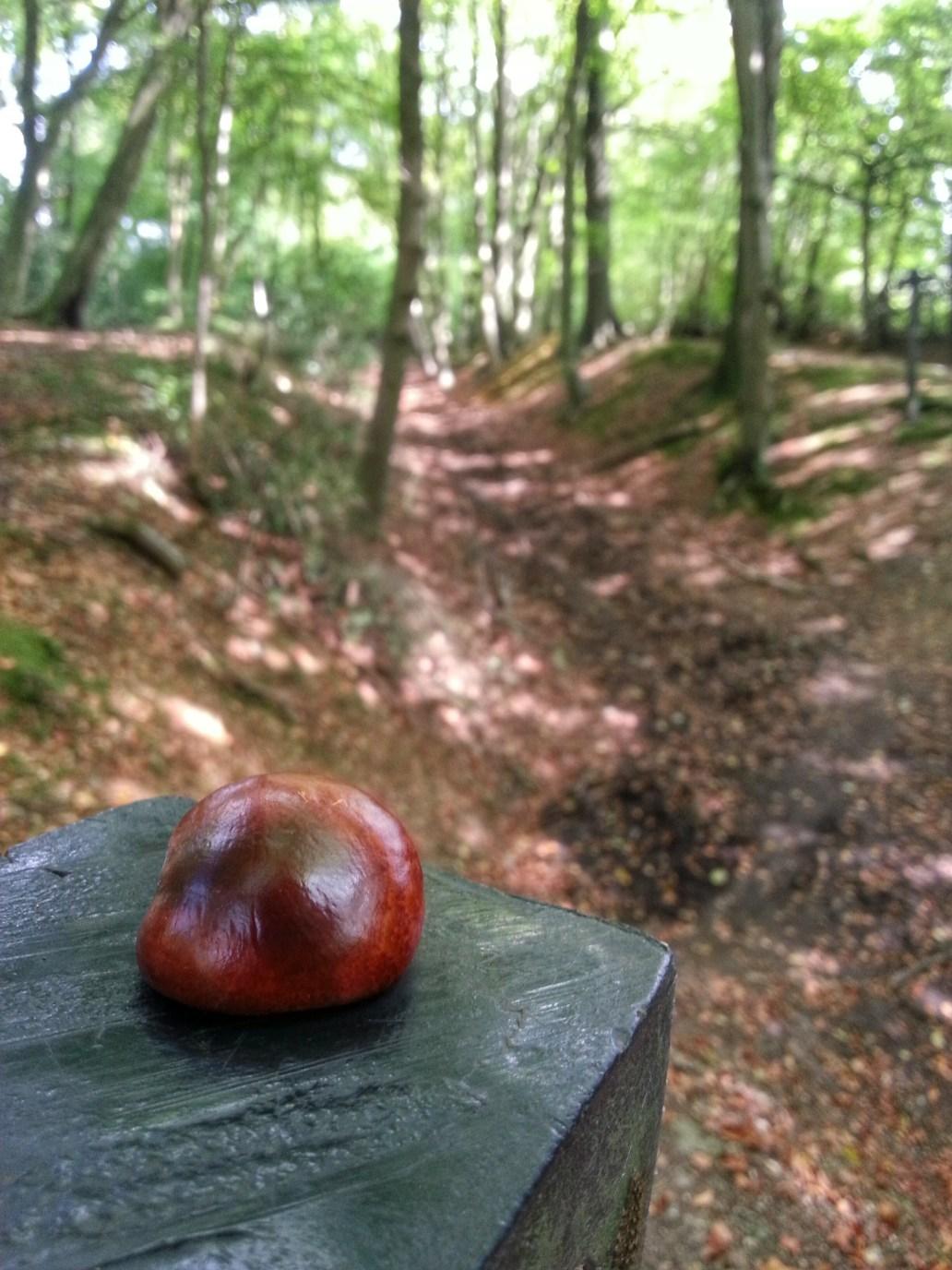 The Ridgeway Path Trail Hike hiking Conker