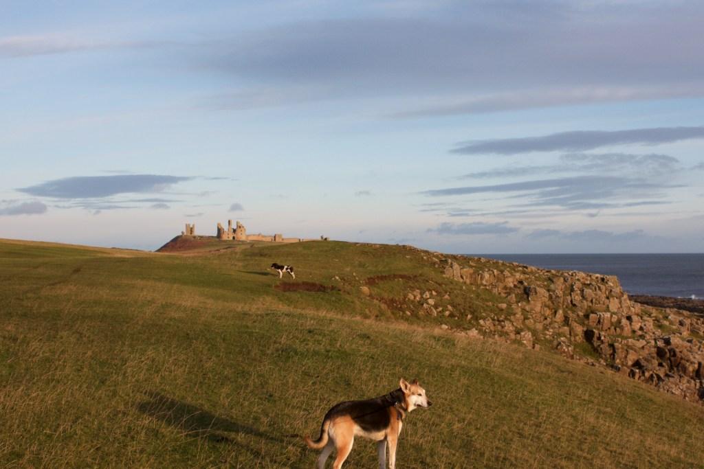 northumberland coastal path Dunstanburgh Castle