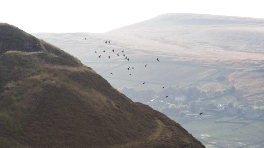 Jackdaw flock Scout quarry Marsden Moor