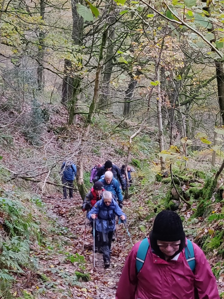 Trees In Mind Trail Colne Valley walkers