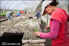 Workers plant seeds in containers to start the growing process.