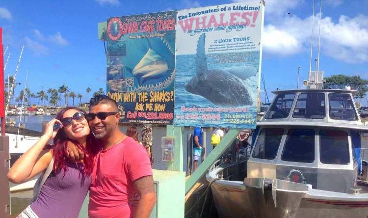 Shark cage dive North Shore