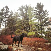 Dog-friendly fun at Blue Mountain Birch Cove Lakes