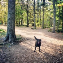 Point Pleasant Park Off-Leash Dog-Friendly