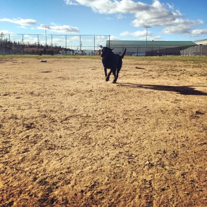 Mainland Common fenced-in off-leash dog park - blog review