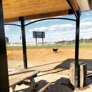 Mainland Common fenced-in off-leash dog park