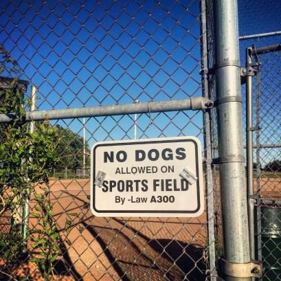 Cole Harbour Commons off-leash / fetch / dog-friendly?