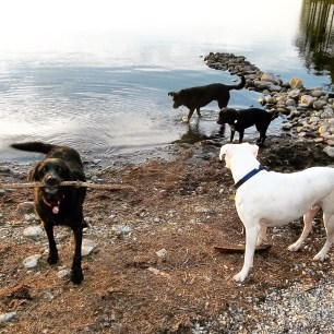 Backcountry Camping with Dogs in Kejimkujik National Park - Off-Leash Dog Friendly