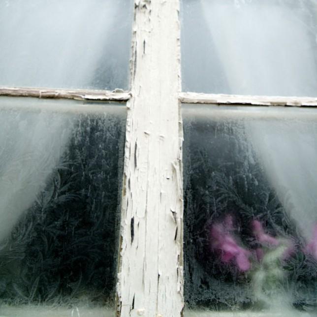 frostruta