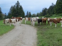 These are the kinds of traffic jams we have!!