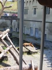 Bear pit in Bern