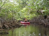 Exploring the mangrove tunnel.