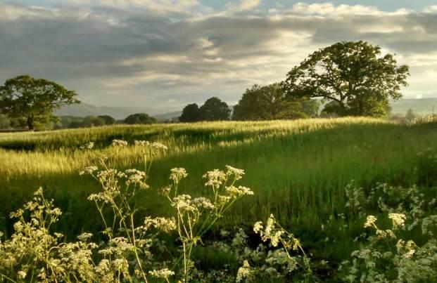 Field next to Harvest Cottage