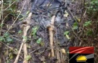 Biafra separatists buried in graves