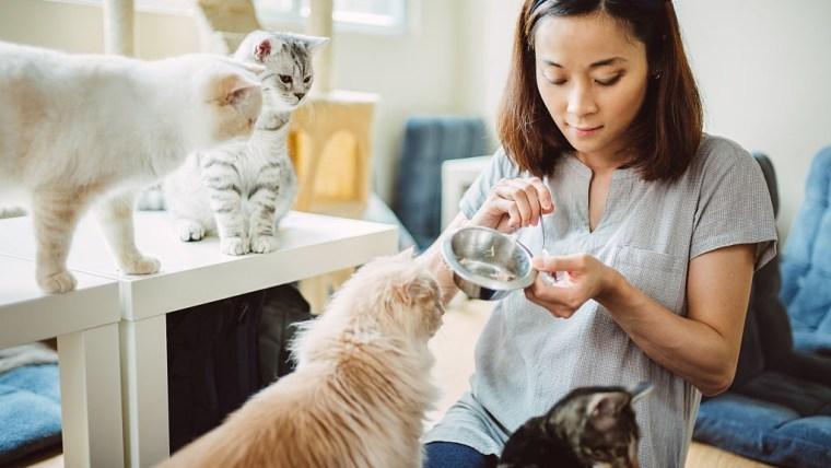 Agar Keluarga & Kucing Sehat, Yuk Ketahui Tahapan Vaksin Kucing Kesayangan Moms