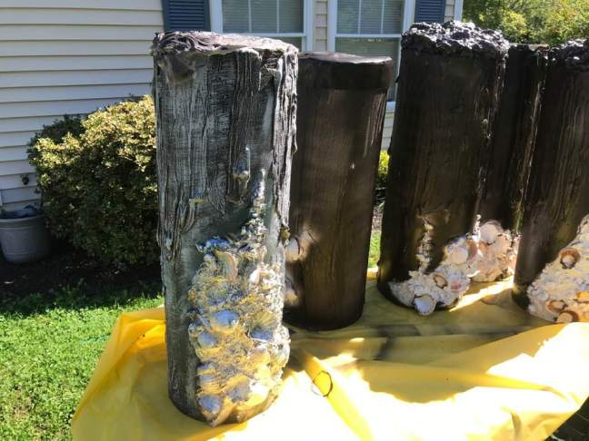 Creepy Dock Piling Props For Halloween Shipwreck Scenes With Barnacles and Shells