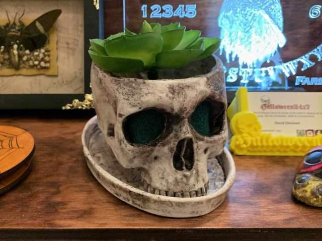 halloween 24x7 skull planter