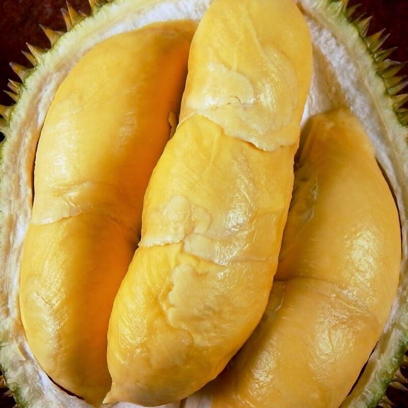Jual Bibit Durian Bawor Murah