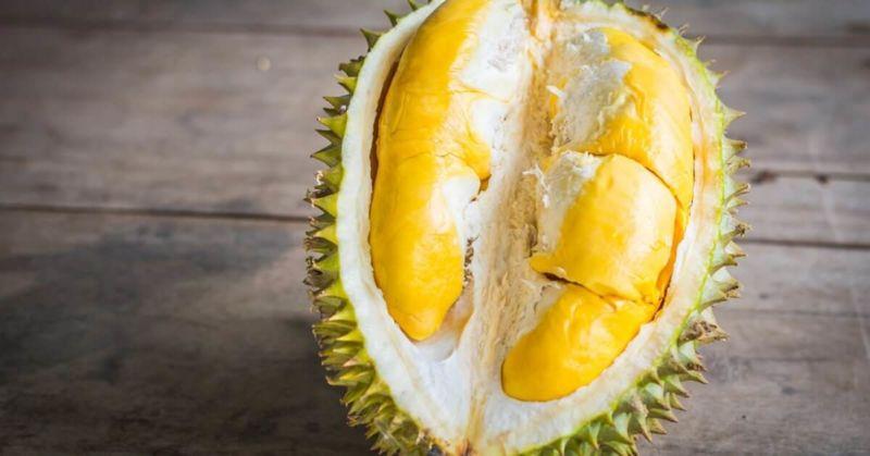 Jual Bibit Durian MusangKing Murah