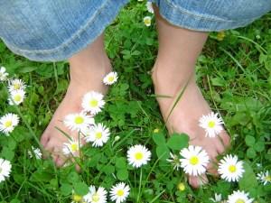 daisy-319695_640