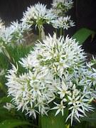 flower-335608__180