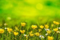spring-316535_640