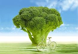 vegetables-694304__180
