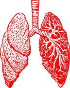 lungs-297492__180