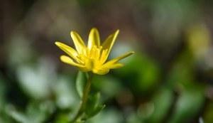 flower-716421__180
