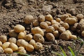 potato-983788__180