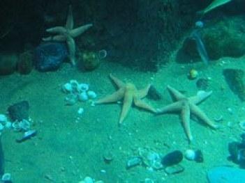 starfish-241870__180