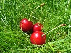 cherry-996590__180
