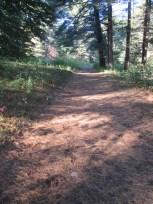 pine needle path