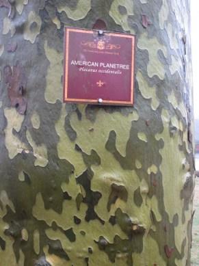 camoflage bark