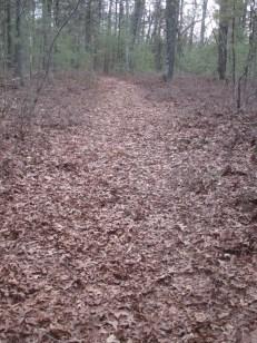 oak leaves on trail