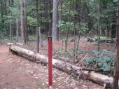 red trail marker