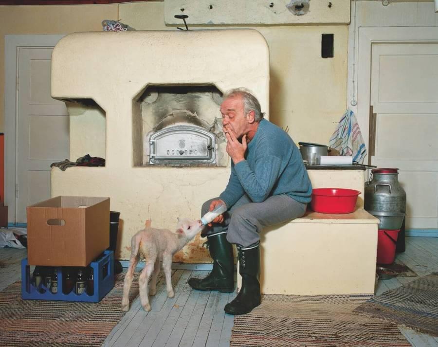 En man röker i ett rum samtidigt som han matar ett lamm med en nappflaska.