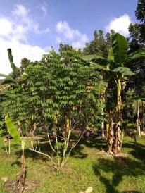 BelizeGVP16