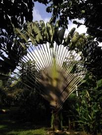 BelizeGVP14
